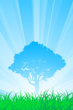 Árbol del verano Imágenes de archivo libres de regalías