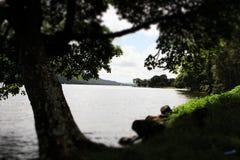 Árbol del verano en el lago Foto de archivo libre de regalías