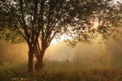 Árbol del verano en niebla de la tarde Imagenes de archivo
