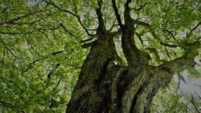 Árbol del verde Imagen de archivo