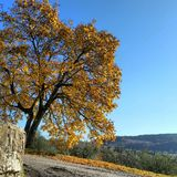 Árbol del vicchio de Italia Florence Borgosanlorenzo Italy Toscana del otoño de Autunno Imagenes de archivo