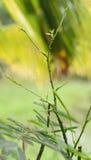 Árbol del zarzo que sube foto de archivo