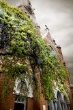 Árbol delante de una iglesia en abajo ciudad foto de archivo