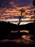 Árbol delante de una puesta del sol foto de archivo libre de regalías