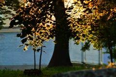 Árbol delante del sol Fotografía de archivo libre de regalías