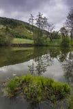 Árbol delgado alto y su reflexión en la montaña del lago Imagen de archivo