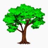 Árbol denso y detallado ilustración del vector