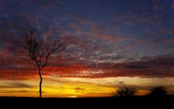 Árbol Derbyshire de la puesta del sol Imagen de archivo