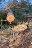 Árbol derribado Fotografía de archivo libre de regalías