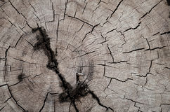 Árbol derribado imagen de archivo