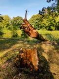 Árbol desarraigado caido en un río Imagenes de archivo