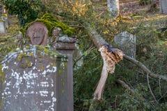 Árbol desarraigado en el cementerio judío viejo con las piedras sepulcrales resistidas, Alemania Imagenes de archivo