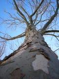 Árbol descubierto Imagenes de archivo
