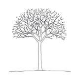 Árbol descubierto ilustración del vector