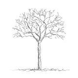 Árbol descubierto stock de ilustración
