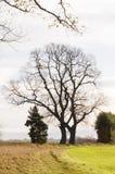 Árbol descubierto Imágenes de archivo libres de regalías