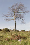 Árbol descubierto Fotos de archivo