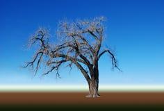 Árbol descubierto, aislado contra un gradiente fotos de archivo libres de regalías