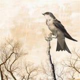 Árbol descubierto con libre illustration