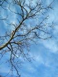 Árbol descubierto del invierno Imagenes de archivo