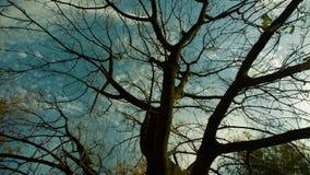 Árbol descubierto del otoño almacen de video