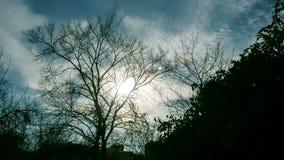 Árbol descubierto del otoño metrajes