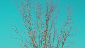 Árbol descubierto en fondo del cielo almacen de video
