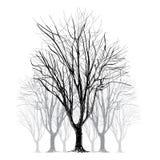 Árbol descubierto grande sin las hojas - dé exhausto ilustración del vector