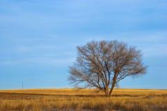 Árbol descubierto solitario en invierno en la pradera imagen de archivo libre de regalías