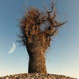 Árbol descubierto solo