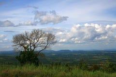 Árbol descubierto solo en la colina Foto de archivo libre de regalías