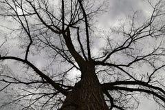 Árbol deshojado Fotografía de archivo
