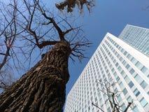 Árbol deshojado contra el edificio en Sapporo Japón fotografía de archivo