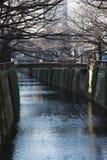 Árbol deshojado de la flor de cerezo a lo largo del río de Meguro el 11 de febrero de 2015 en Tokio Imagenes de archivo