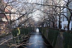 Árbol deshojado de la flor de cerezo a lo largo del río de Meguro el 11 de febrero de 2015 en Tokio Foto de archivo