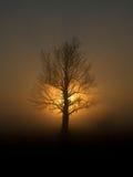 Árbol deshojado en puesta del sol Imagen de archivo libre de regalías
