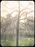 Árbol deshojado en una mañana brumosa del invierno Imagen de archivo