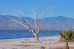 Árbol desnudo Fotografía de archivo libre de regalías