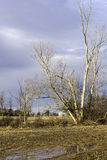 Árbol desnudo alto en la inundación de las tierras de labrantío en deshielo de la primavera, cielo nublado Imagen de archivo