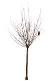 Árbol desnudo con el cuervo Imagen de archivo libre de regalías
