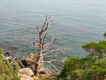 Árbol desnudo contra el mar Fotografía de archivo libre de regalías