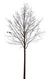 Árbol desnudo en blanco Fotografía de archivo