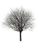 Árbol desnudo en blanco Fotografía de archivo libre de regalías