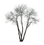 Árbol desnudo en blanco Fotos de archivo