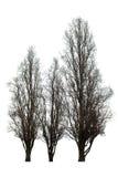 Árbol desnudo en blanco Foto de archivo libre de regalías