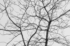 Árbol desnudo en blanco y negro Foto de archivo