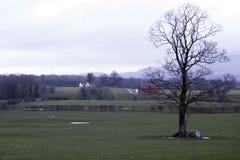 Árbol desnudo en campo BRITÁNICO Imágenes de archivo libres de regalías