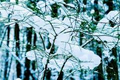 Árbol desnudo en el invierno cubierto en nieve después de una tormenta de la nieve en un área en Vancouver, A.C. delta, pantano d imágenes de archivo libres de regalías