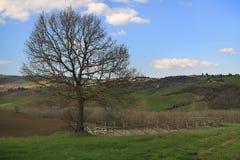 Árbol desnudo en Toscana Imagenes de archivo