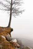 Árbol desnudo por el agua Fotografía de archivo libre de regalías